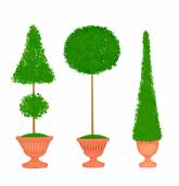 Three Topiaries in Terra Cotta Urns — Stock Photo