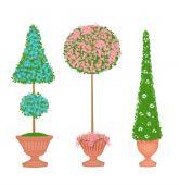 Three Floral Topiaries — Stock Photo