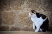 Beautiful Cat — Stock Photo