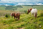Konie w toskanii — Zdjęcie stockowe