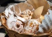 Conchas do mar, em uma cesta — Fotografia Stock