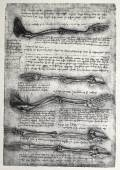 Old anatomy drawings — Stock Photo