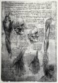 Old anatomy drawings — 图库照片