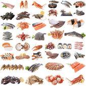 Seafood, fish and shellfish — Stock Photo
