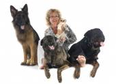 Woman and dogs — Stock Photo
