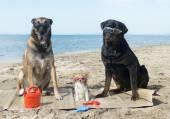 Three dogs on the beach — Stock Photo
