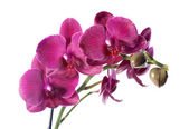 Orchidea w doniczka — Zdjęcie stockowe