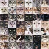 Group of cats — Zdjęcie stockowe