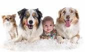 Baby and dogs — Stock Photo