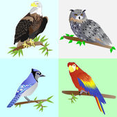 Collection of beautiful birds — Stock Vector