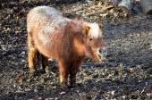 лошадь в зоопарке — Стоковое фото