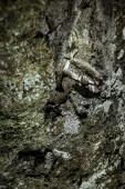 一棵树的树皮 — 图库照片