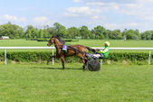 Wroclaw, Poland, May 10, 2015: Presentation of the horses before the International race for 3 year old and older trotters French sulki in Wroclaw. — Stock Photo