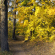Path leading through the autumn forest on a sunny late afternoon — Stock Photo #55800967