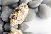 Natural spa elements- seashell with starshell and stones on whit — Stockfoto