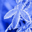 Frost leaves — Stock Photo #64329513