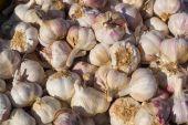 A heap of garlic bulbs — Stock Photo