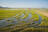 Flooded rice field — Stockfoto