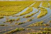 Flooded rice field — Stock Photo