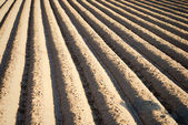 Deep freshly ploughed furrows — Stock Photo