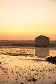 Reisfelder bei Sonnenaufgang — Stockfoto