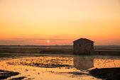 Rice paddy at sunrise — Foto Stock