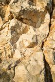 Texture of a limestone rock — Stock Photo