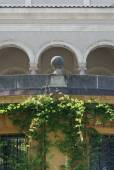 Classical Architecture with Vines — Stock Photo