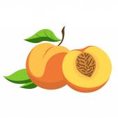 Peach and cut — Stock Vector