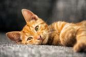 Portrait of cute kitten — Stock Photo