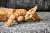 Cute cat lying  — Stock Photo