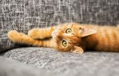 Cute baby cat — Stock Photo