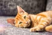 Adorable kitten — Stock Photo