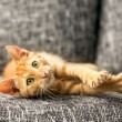 Domestic cat — Stock Photo #54808975