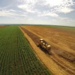 Aerial flight over combine harvesting the yellow wheat rows — Stock Video #67616851