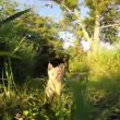 Funny Little cat playing hunting the camera — Stock Video #67623965