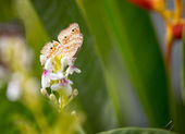 Elegant butterfly in nature — Foto Stock