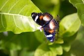 Beautiful butterfly with open wings  — Stock Photo