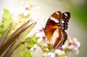 Tame butterfly — Stock Photo