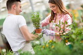 Couple of workers tending a plant in greenhouse — Stock Photo