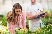 Inventory of plants in greenhouse — Stockfoto