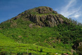 High green mountain near Ooty, Tamil Nadu, India — Stock Photo