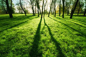 Morning sunshine on a grass in park — Stock Photo