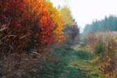 Autumn colors in nature — Stock Photo