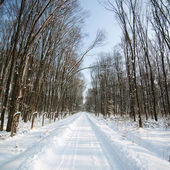 Snowy forest road — Stock Photo