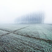 Snow covered trees and field — Stock fotografie