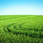 Beautiful green field — Stock Photo #68253501