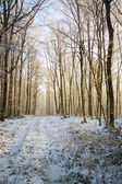 Sunny winter forest road — Stock Photo