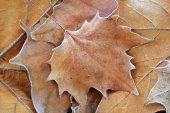 Autumn leaves on ground — Stock Photo