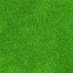 textura de hierba verde — Foto de Stock   #53977973